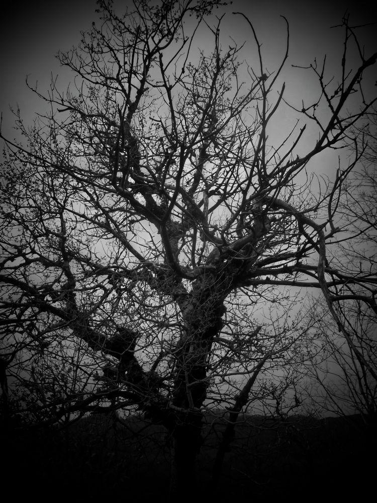 alberonero.jpg by franca
