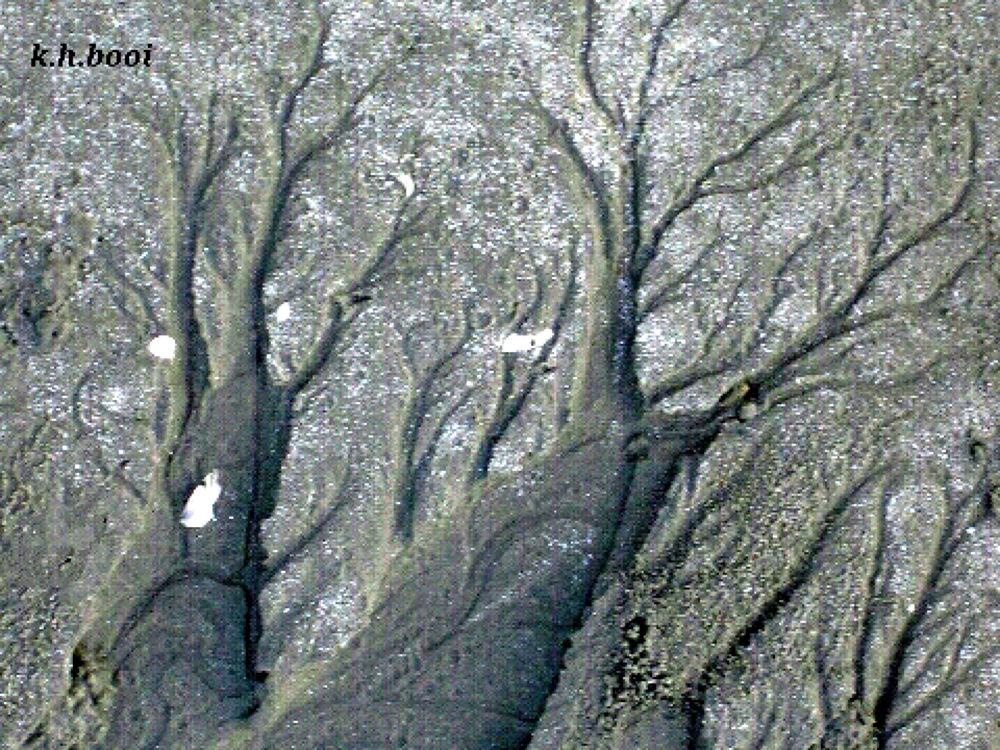 Beach design----resembling a forest by korhbooi