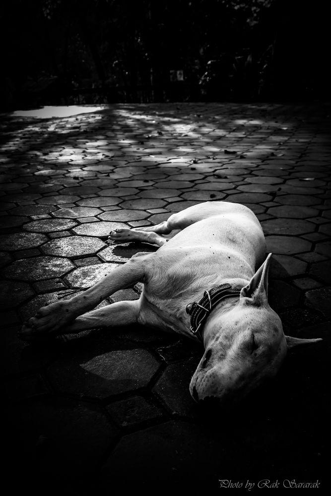..(Dog)Sleep.. by sararak999
