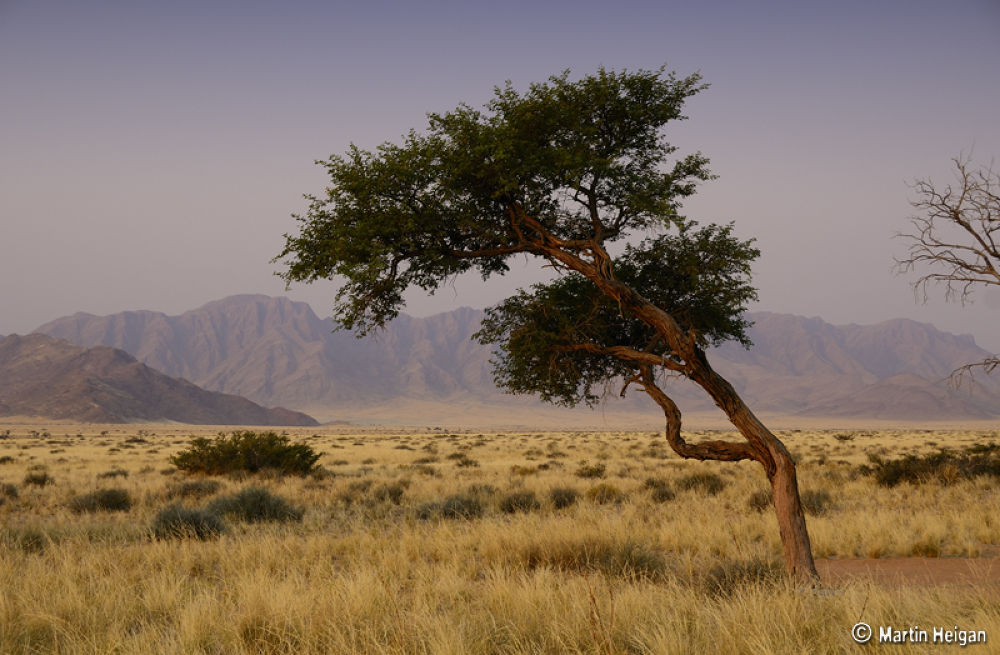 The view from our Tented Camp at Sossusvlei, Namibia. by Martin Heigan
