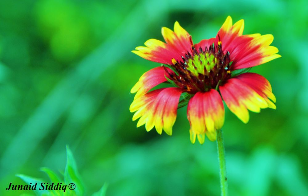 Photo in Nature #flower #colors #colorful #nature #beauty
