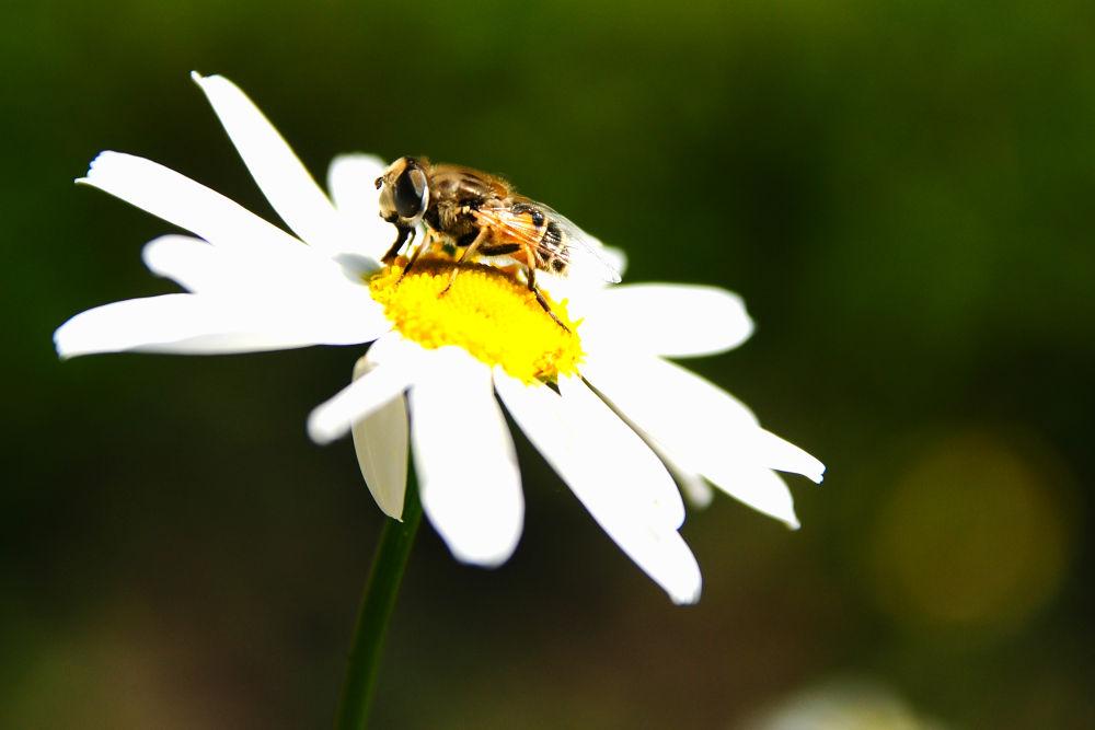 white flower by El Barto
