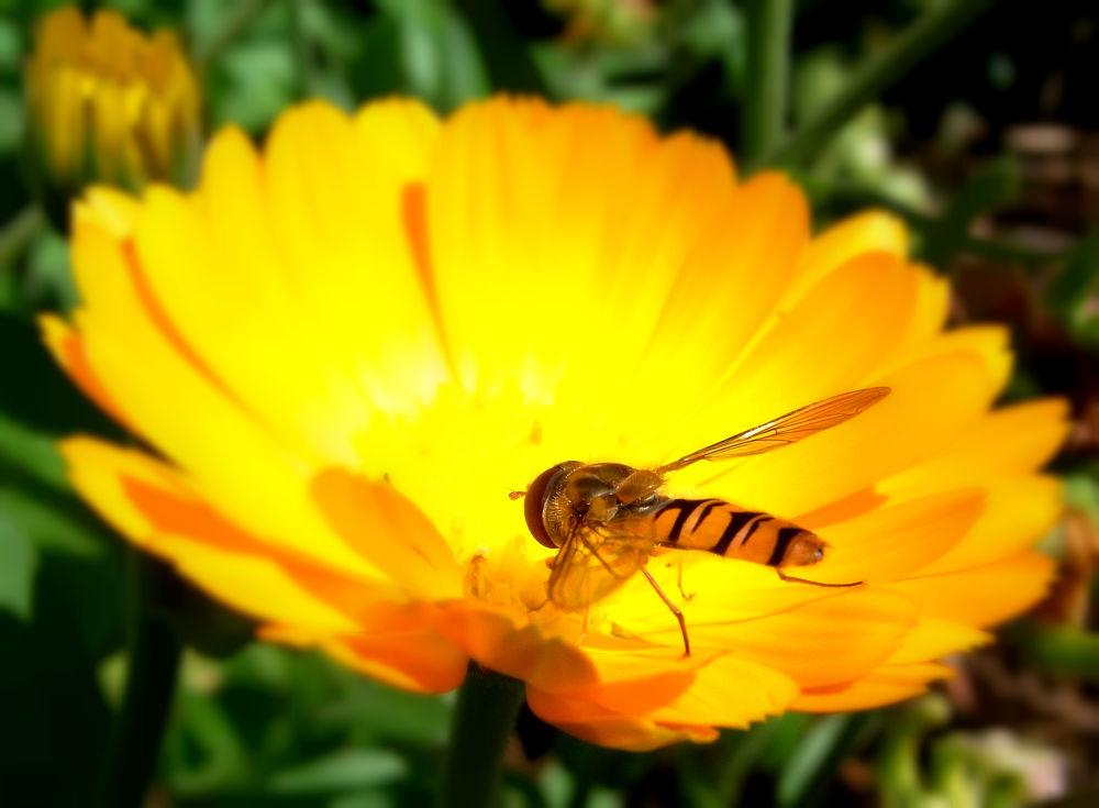 Blume by El Barto
