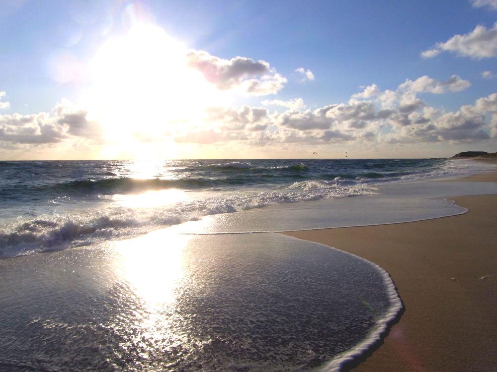 Wave by El Barto