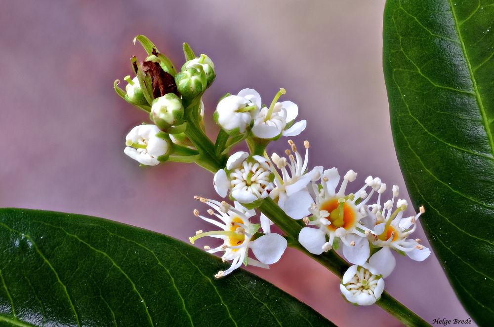 Flower by helgebrede