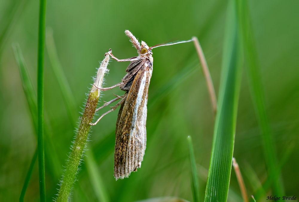 Moth by helgebrede