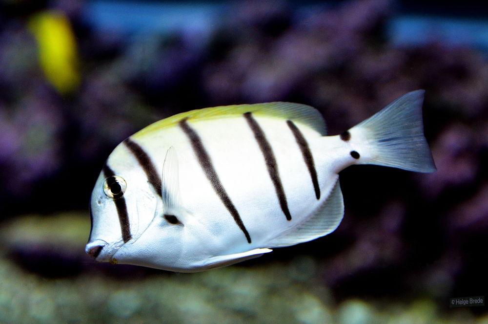Fish by helgebrede