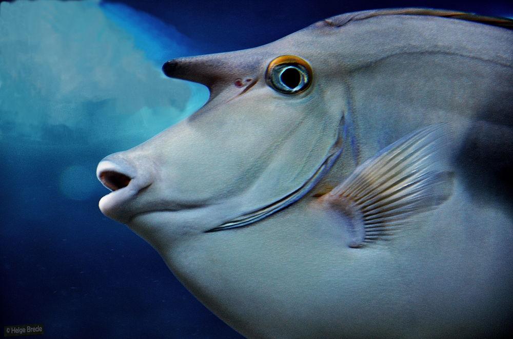 Photo in Animal #fish