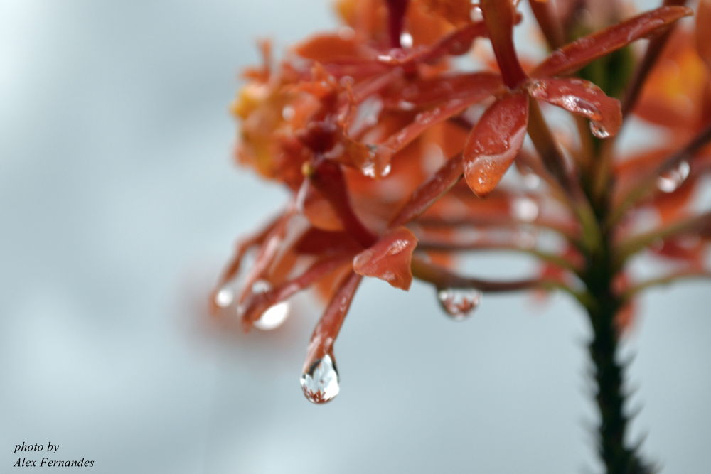 After Rain by Alex Fernandes