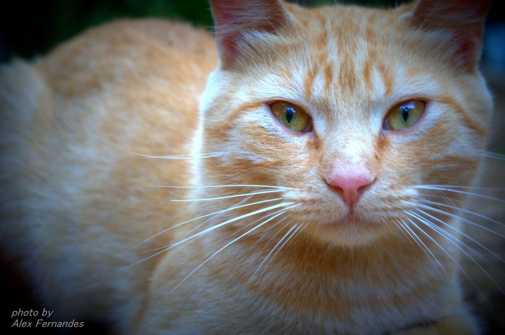 Cat by Alex Fernandes