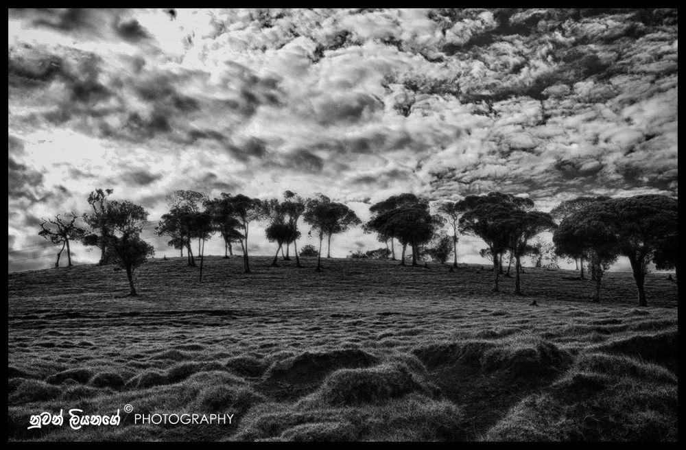 Meadows at Ambewela Farm (Nuwara Eliya- Sri Lanka) by mlnuwan