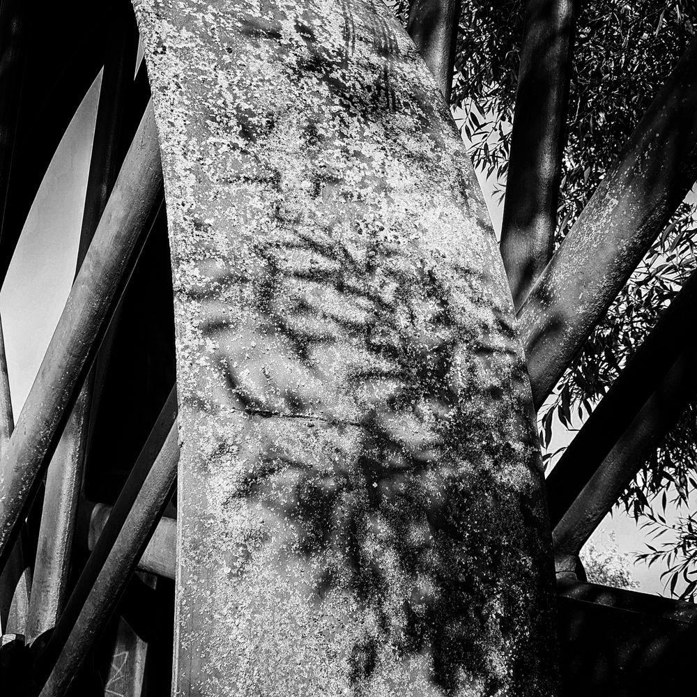 Wheel | Leaf