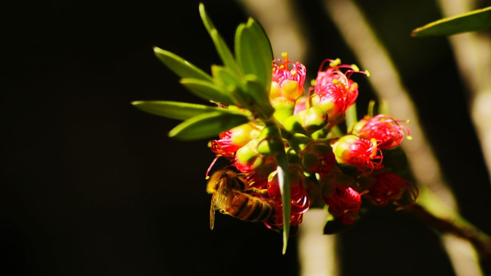 Bee Style by miguelwolve