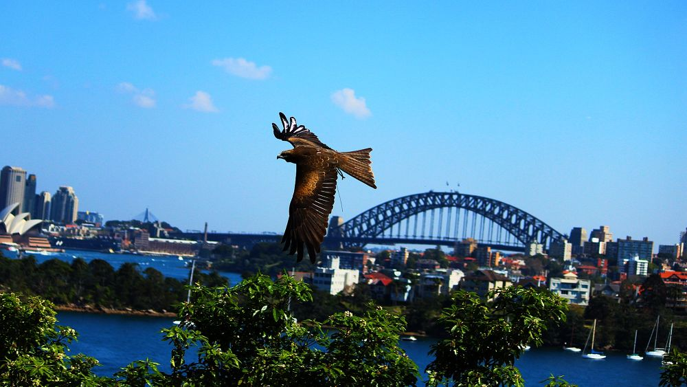 Sydney Harbour by miguelwolve