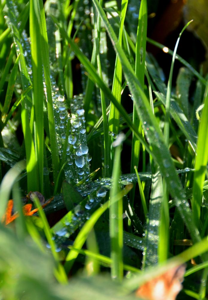 Grass and Droplets by Angie Rumble