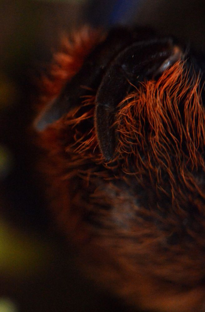 Tarantula Spinnerets by Angie Rumble