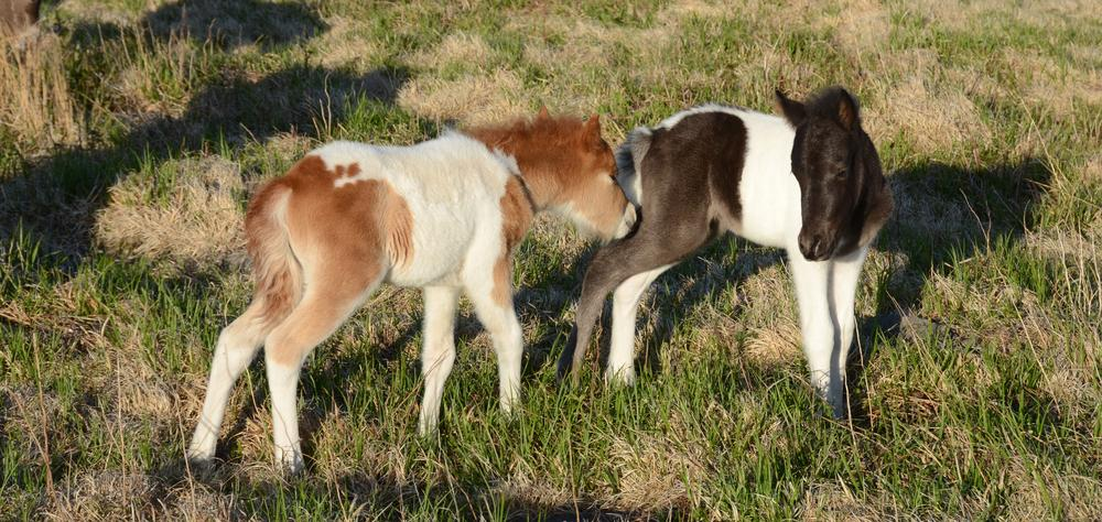 Photo in Animal #wild ponies