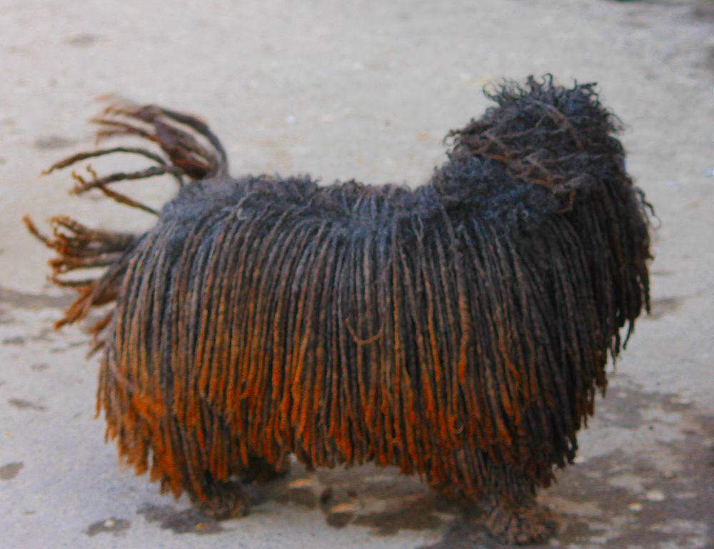 cane rasty by dalessionicola