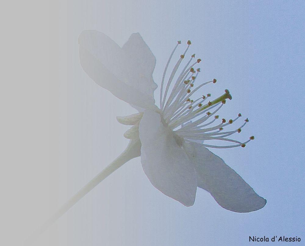 fiore nella nebbia by dalessionicola
