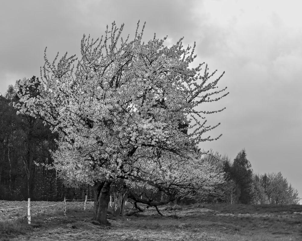 Wiosenny pejzaż by Zbigniew Gałucki