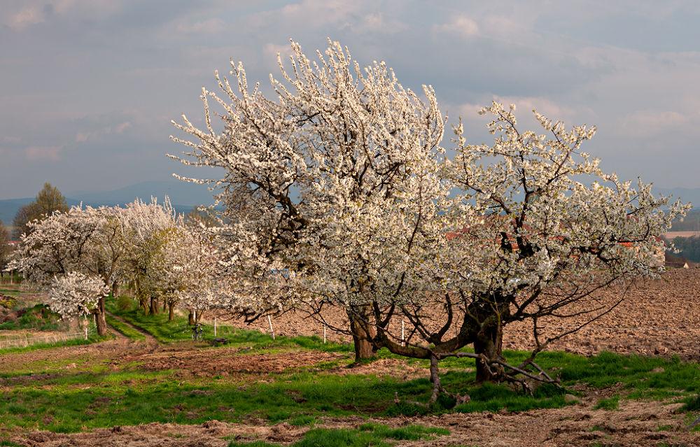 Wiosna  by Zbigniew Gałucki