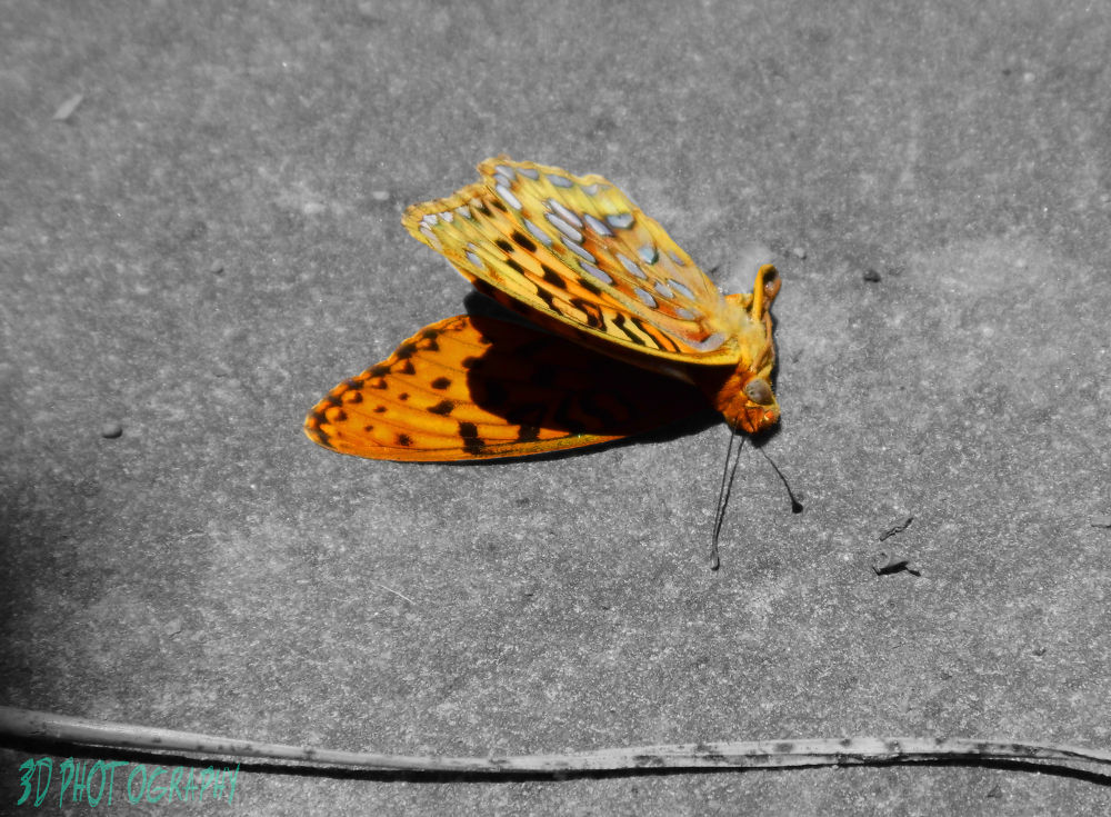 Butterfall by 3D Photography