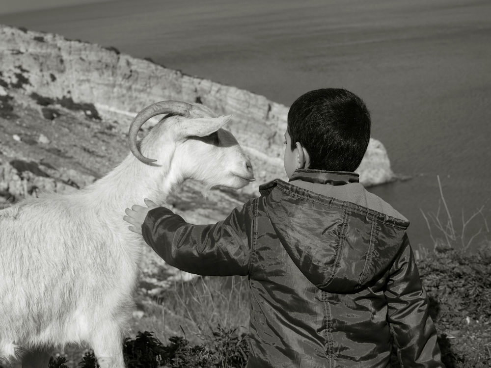 Boy and the goat/ Naxos . Greece by lambriana