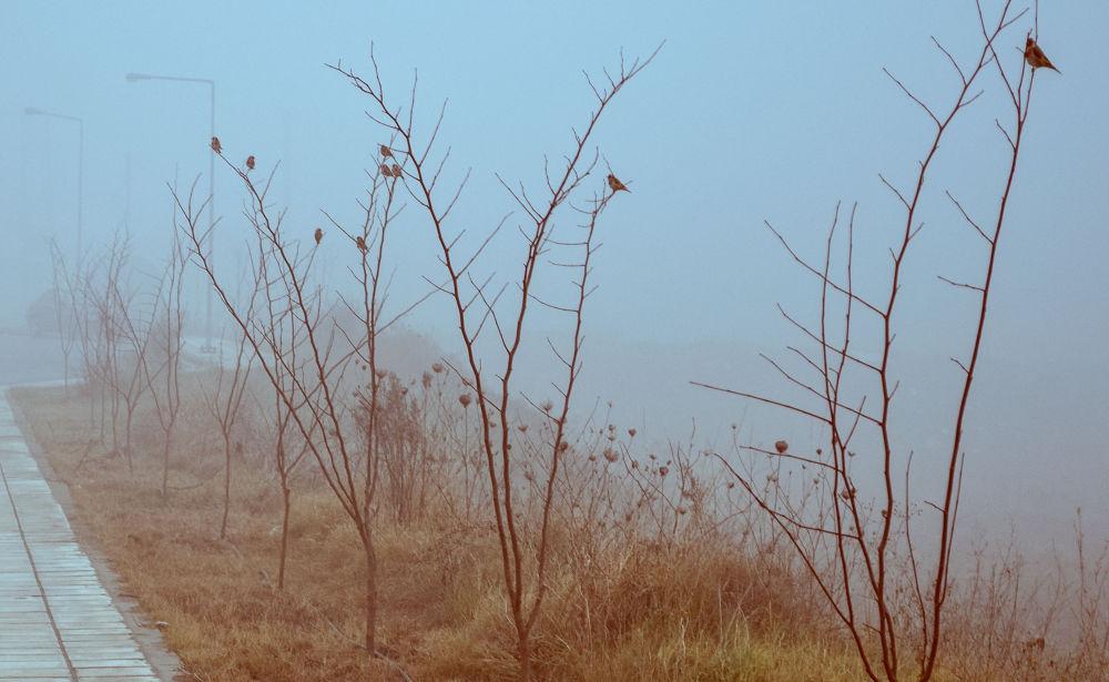 Foggy day by lambriana