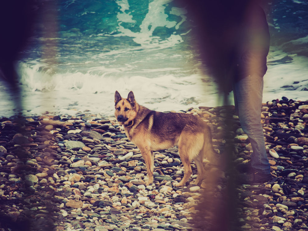 Dog in Apollonas,Naxos, Greece by lambriana