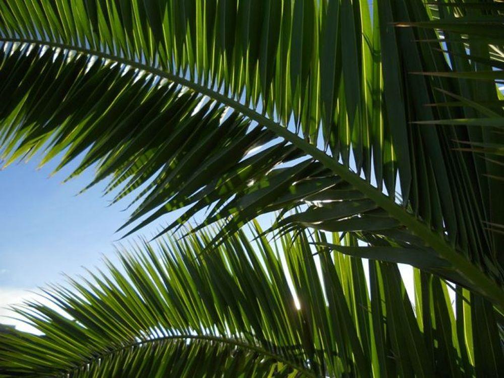 Palm Tree by Beatriz Silva