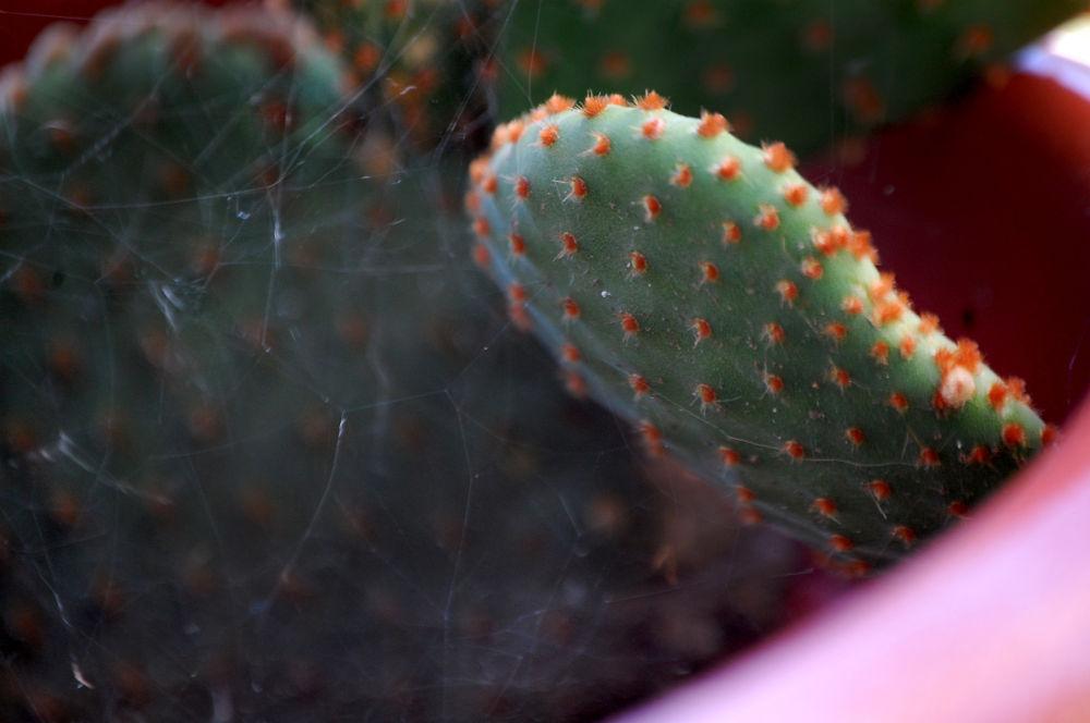 Cactus by Beatriz Silva