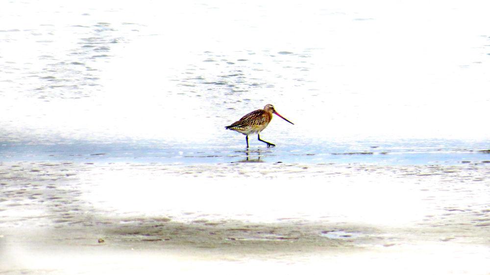 Bird on the beach by Sonny Kraack
