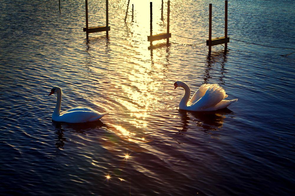 In the sunset by Sonny Kraack