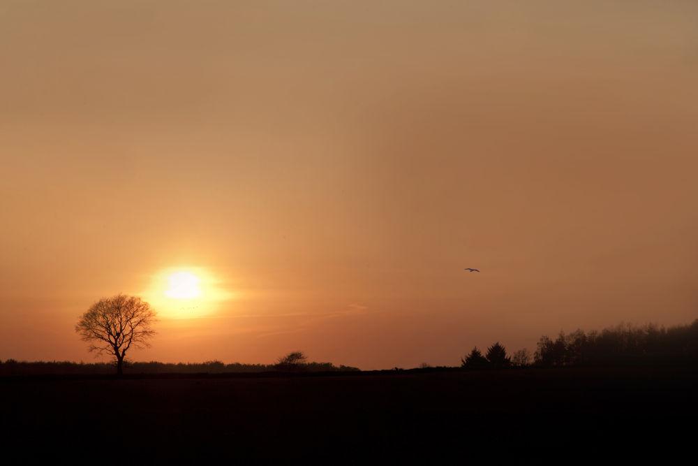 One tree sunset by Sonny Kraack