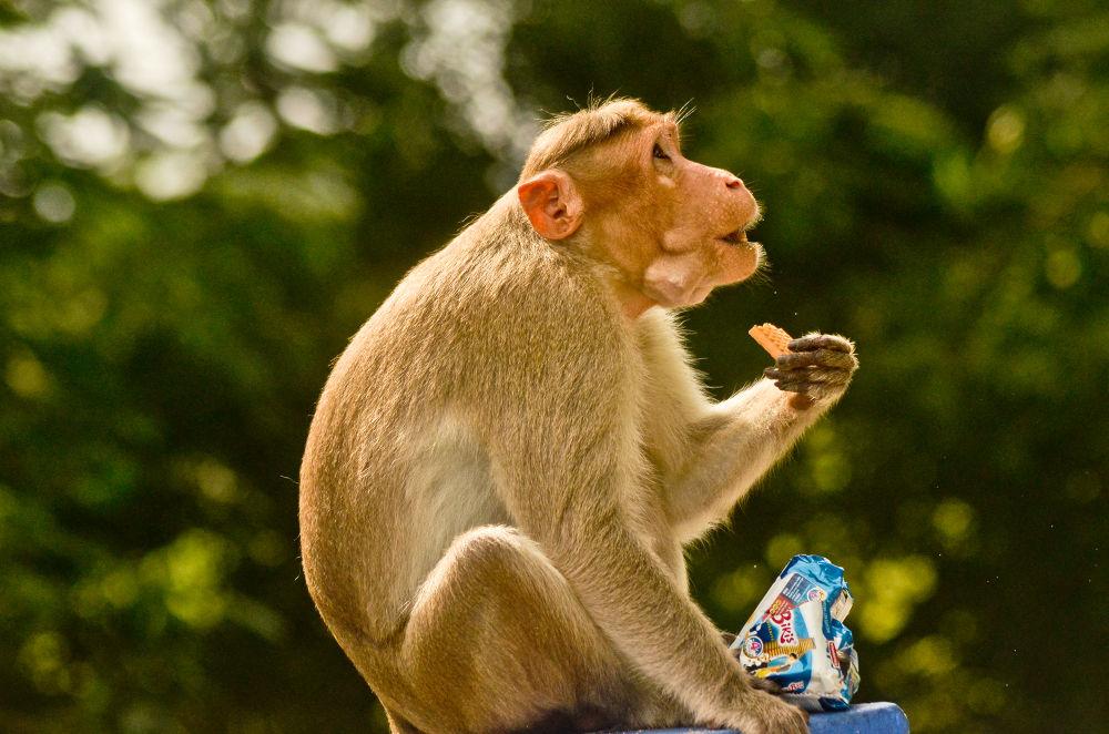 Our ancestor..really brainy.. by Dhinesh Rajarathinam