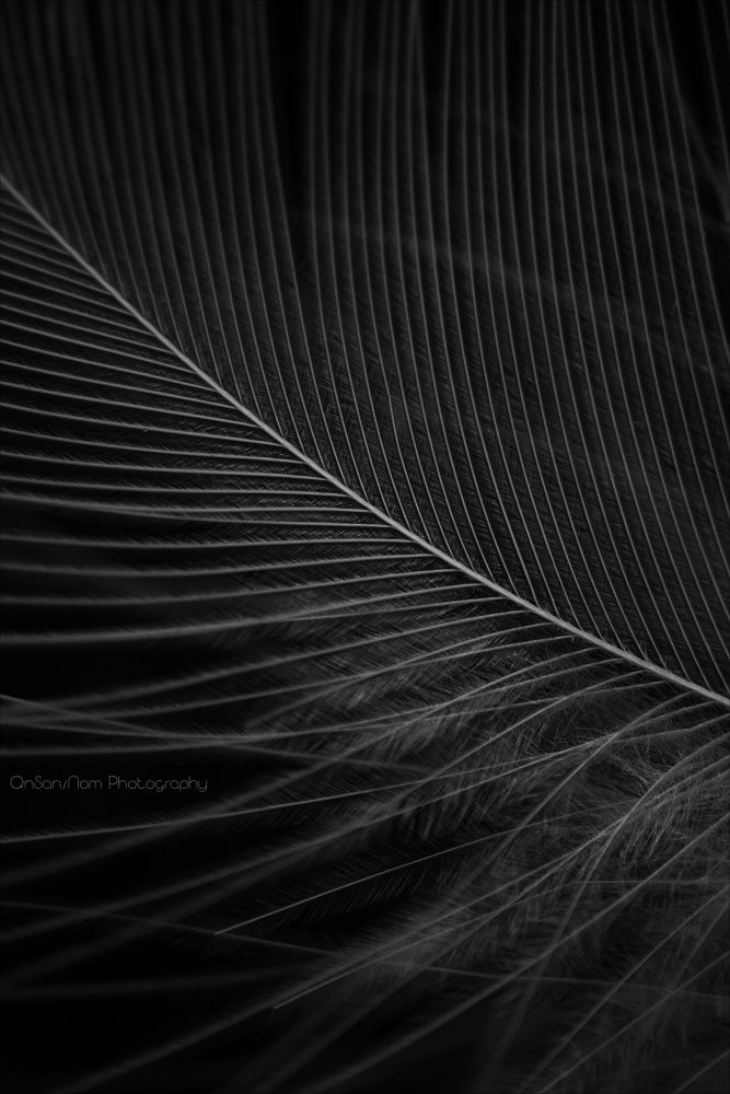 as light as a feather by QnSansNomPhotography