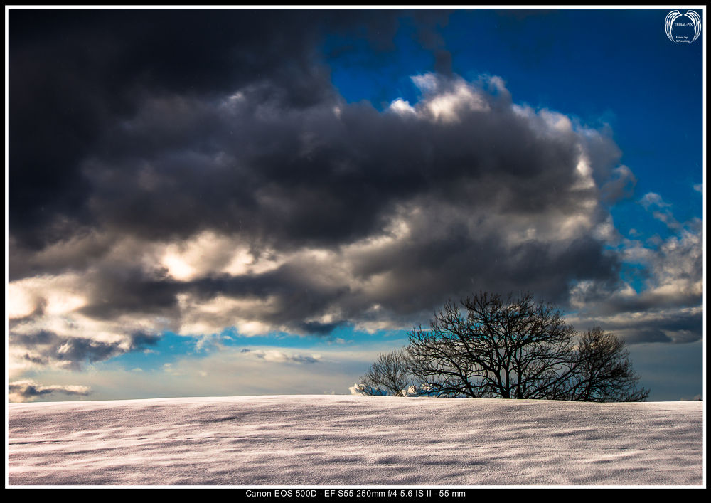Winter... by Stephan Nenning