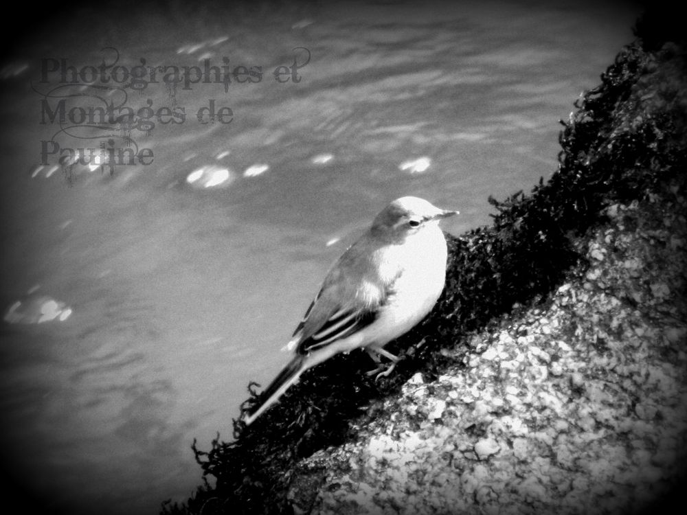 Photo in Random #pont-aven