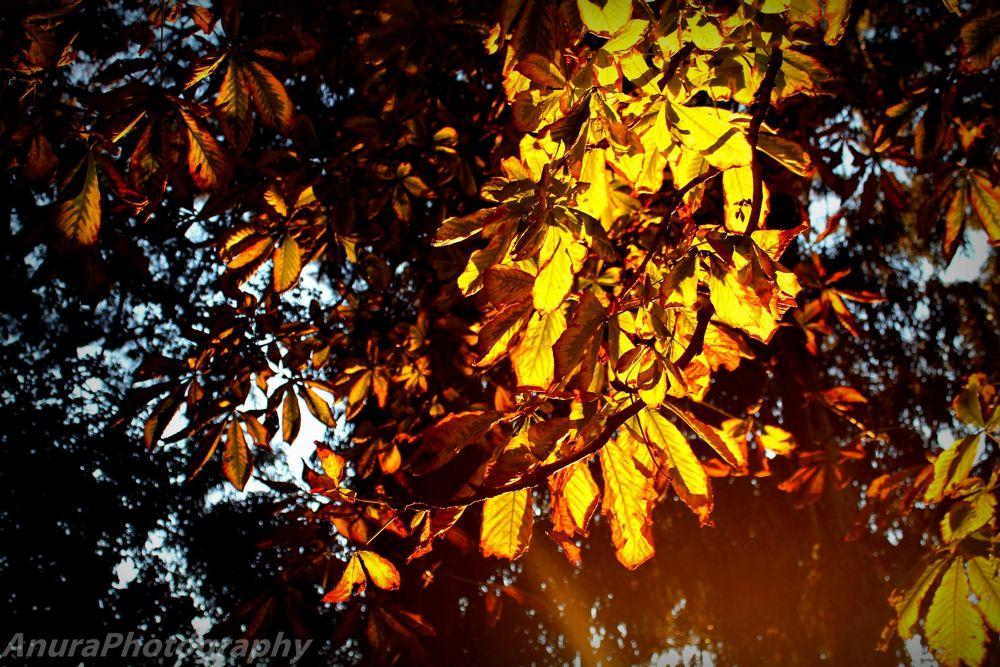 autumn lights by AnuraPhotograhy