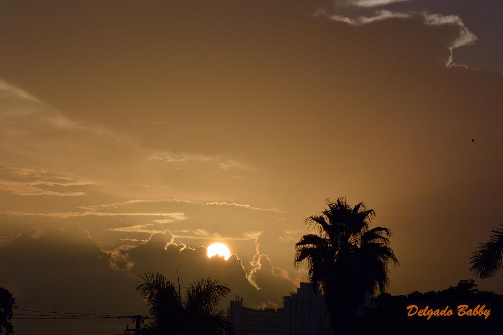 El Sol de Miami. by delgado.babby