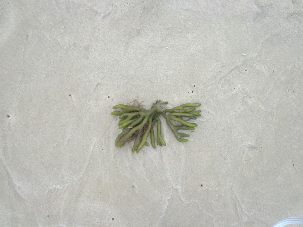 Seaweed by lucy yuriko pelliser