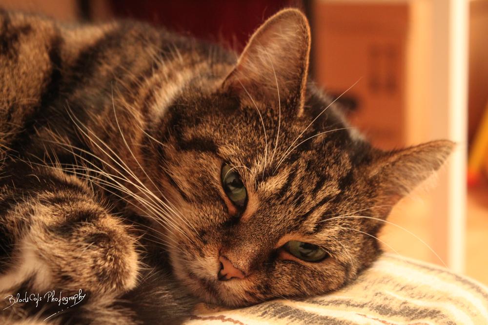 schlafendes wollknäul by BlackCat