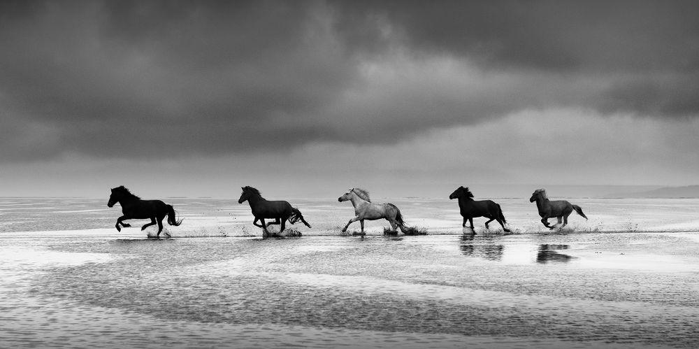 Running Free by Asmita Kapadia