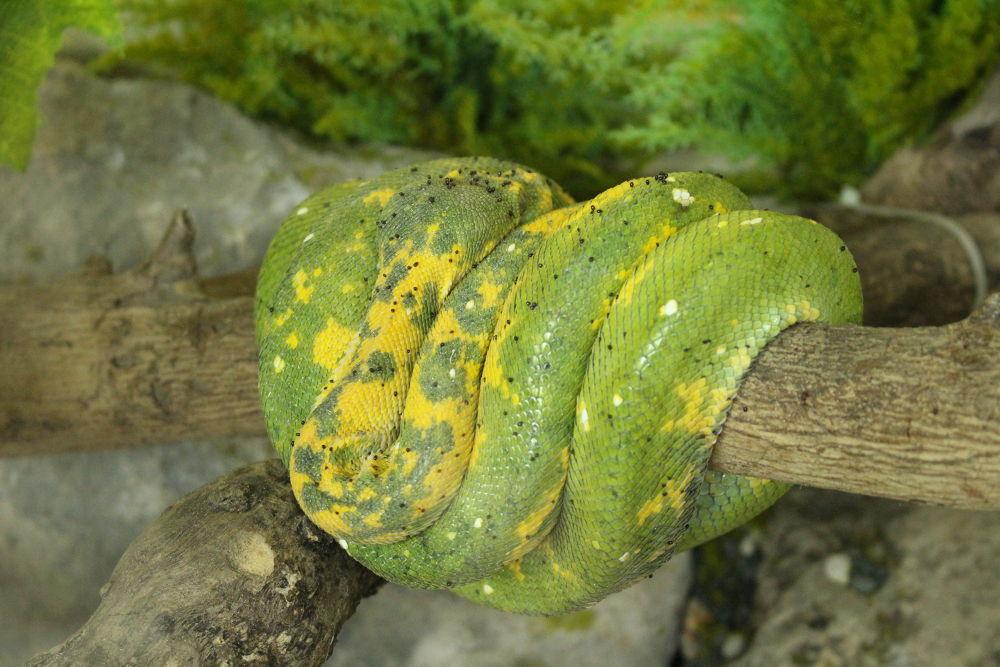 sleeping snake by Ricky adi n