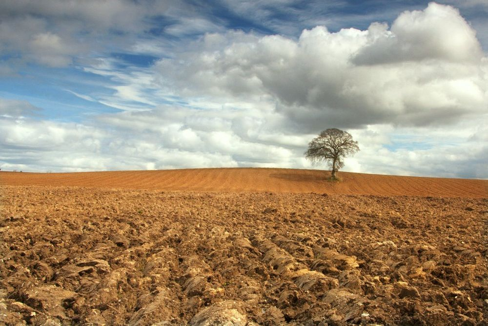 A freshly ploughed field. by EdwardDullard