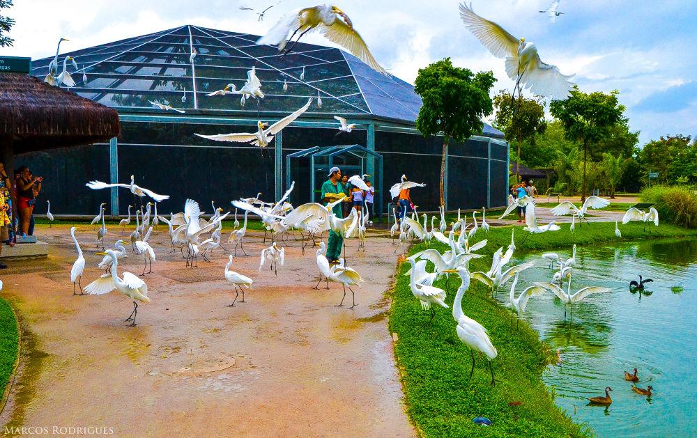 Mangal das Garças ( http://www.mangalpa.com.br/ ) ( Belém - Pará - Brazil ) by MarcosRodrigues