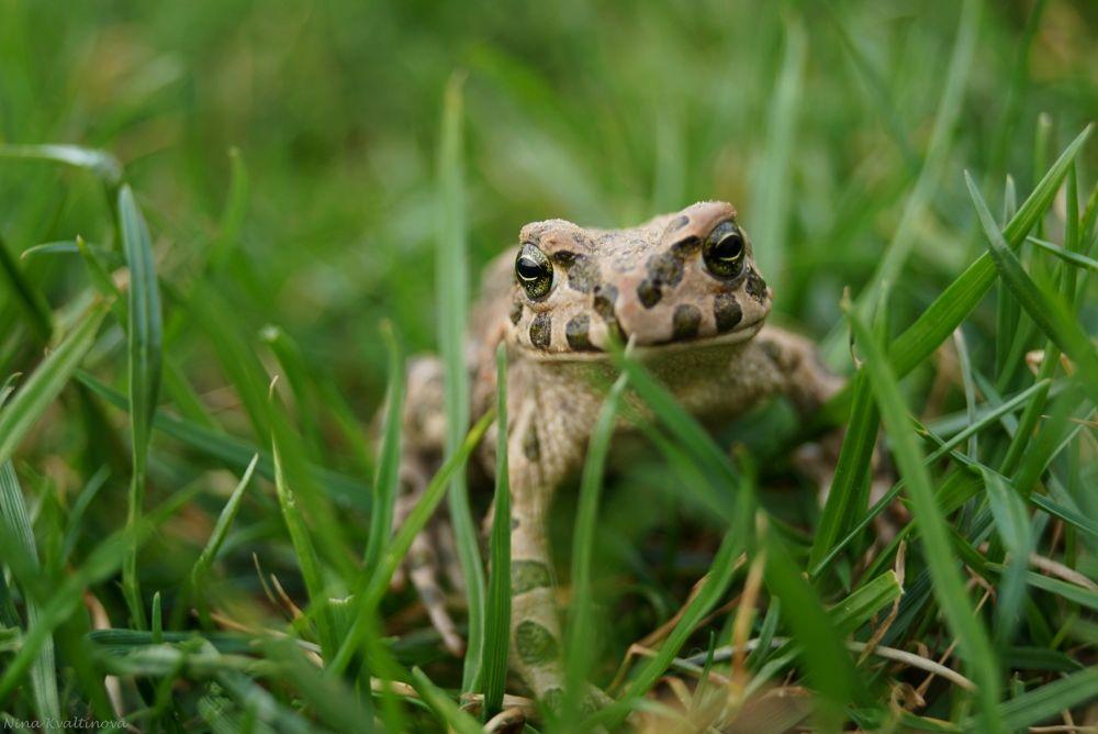 frog :) by Nina Kvaltinová