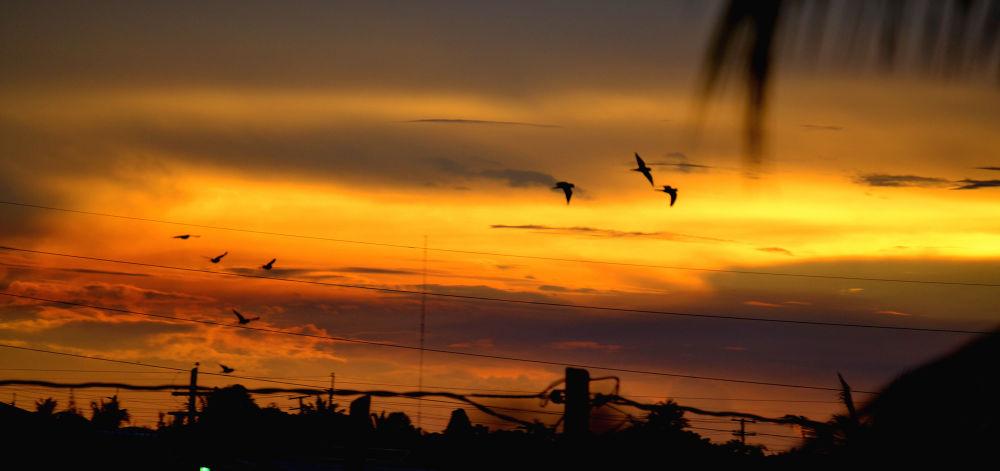 #Birds by ackeem