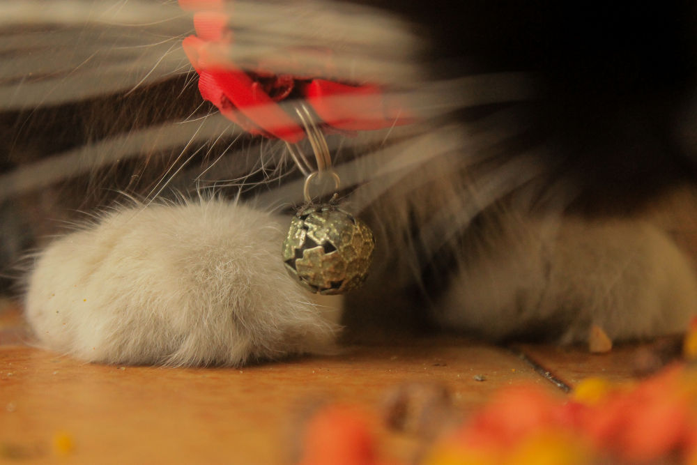 Photo in Random #pants #cat