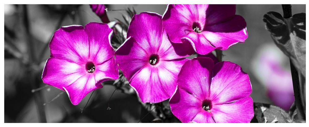 fiori lilla.jpg by Catalanofoto
